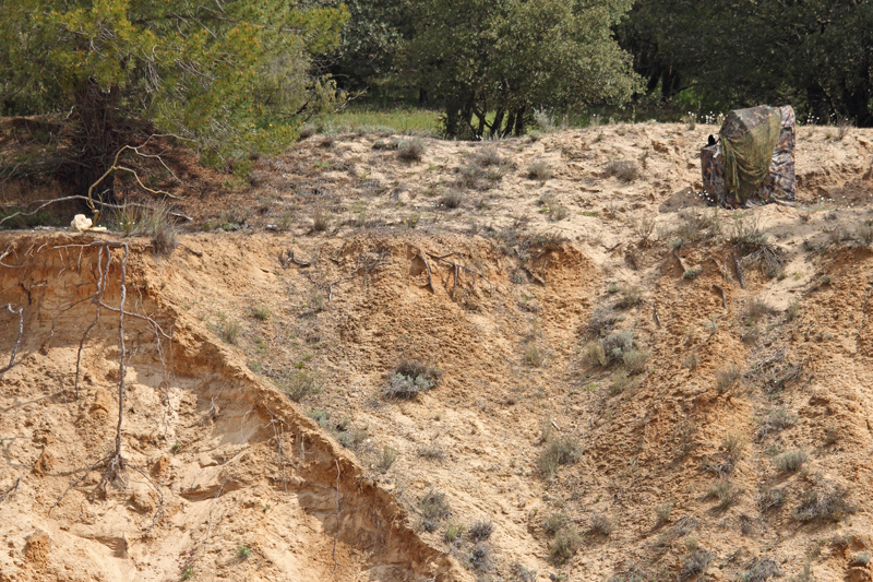 Puebla de Pedraza-Hide de abejarucos