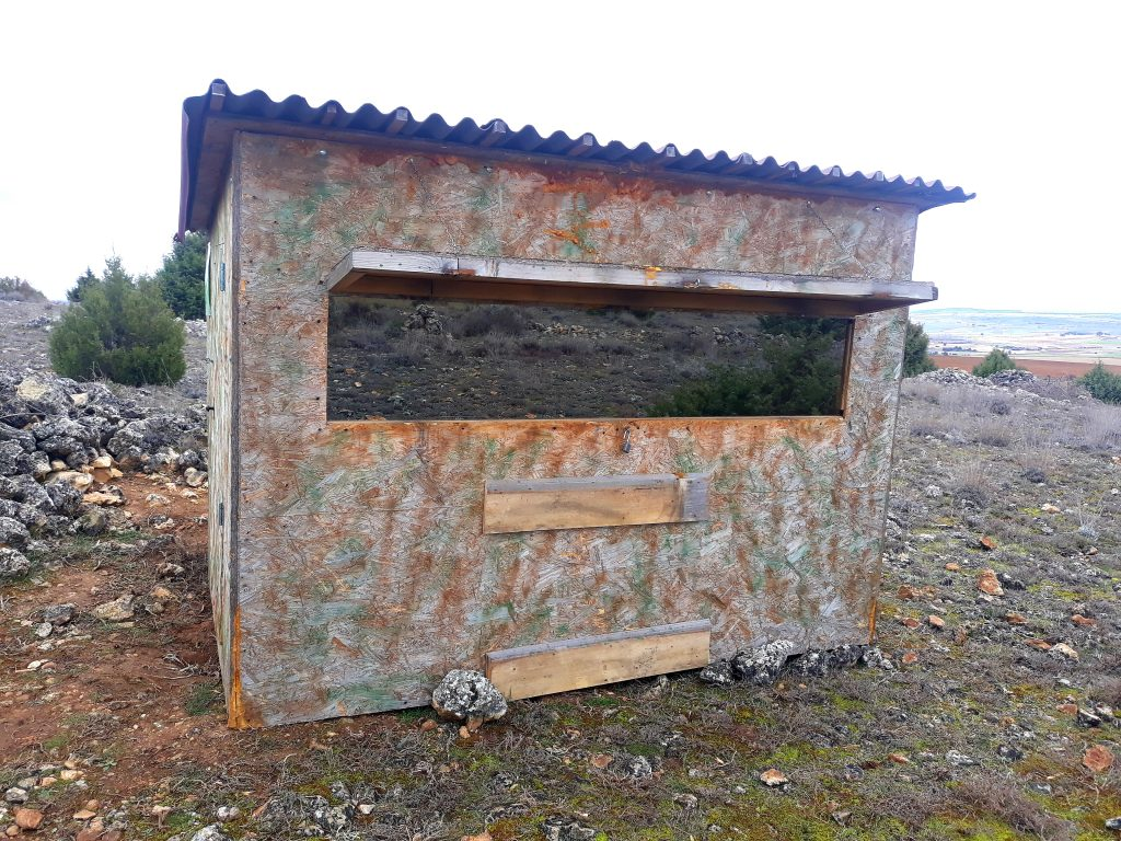 Hide de águila real - Golden Eagle Hide